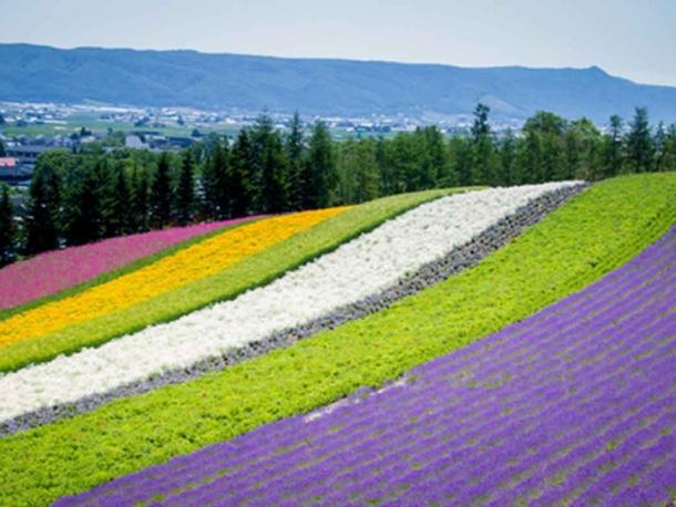 Hokkaido Experience - May 2017 Dep
